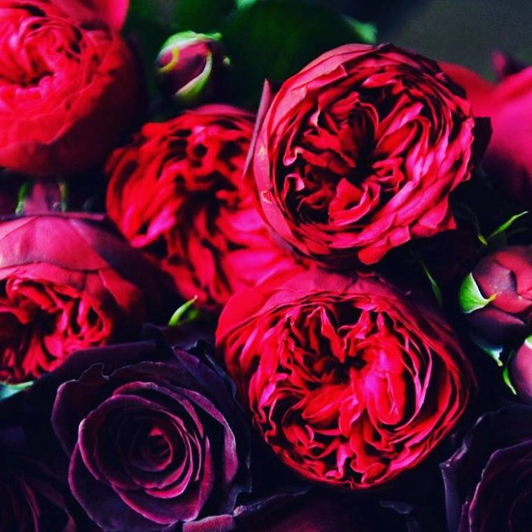 Valentine's Day – How to care for your roses