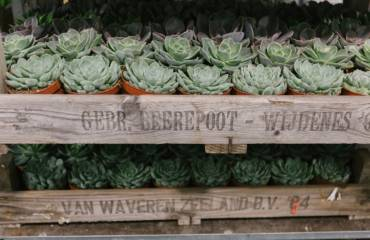 Succulents – how to care for them